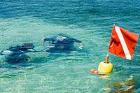 pic-diver-flag.jpg
